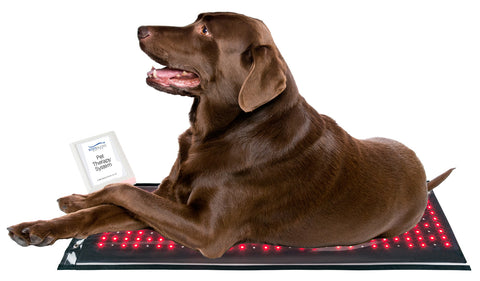 Body Balance System Red Light Therapy for pets