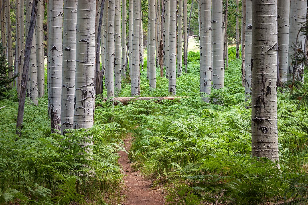 aspen nature trail flagstaff hikes