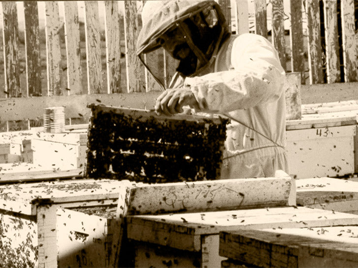 Beekeeper in the Sunshine