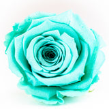 'Infinity' 30cm Rose Stems - 6 OR MORE - Preserved Roses