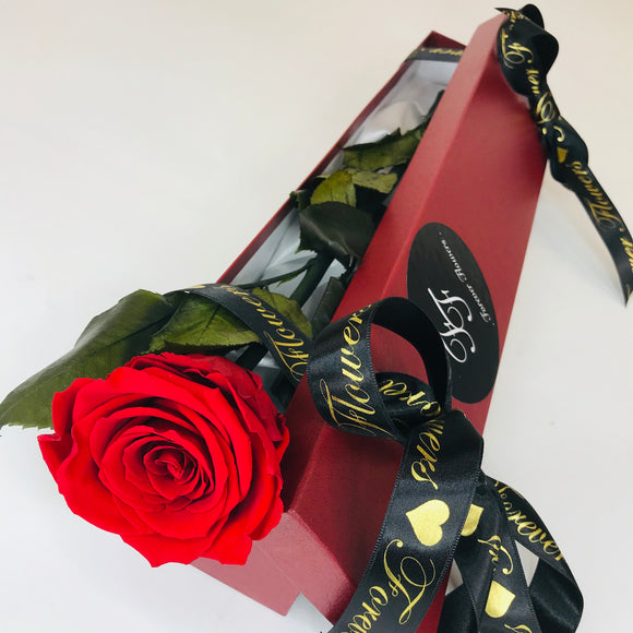 Single Preserved 30cm Red Rose - Valentine's Day