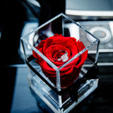 'La Rosa Bebé' Acrylic Box SINGLE - Preserved Rose