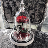 'Belle' Glass Dome MEDIUM & LARGE - Preserved Rose