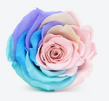 'Infinity' 30cm Stem SINGLE - Gift Boxed Preserved Rose