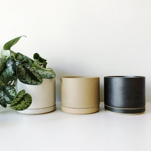 Sleek, minimal, and sophisticated, porcelain planters from Hasami. Made in Japan with their renown porcelain, these planters have a drain hole and matching tray underneath to catch run off. Comes in a matte or gloss finish. at Port of Raleigh