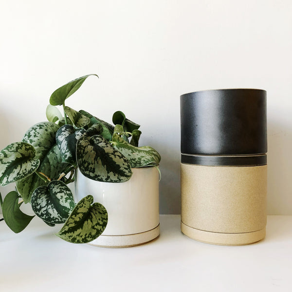 Sleek, minimal, and sophisticated, porcelain planters from Hasami. Made in Japan with their renown porcelain, these planters have a drain hole and matching tray underneath to catch run off. Comes in a matte or gloss finish.