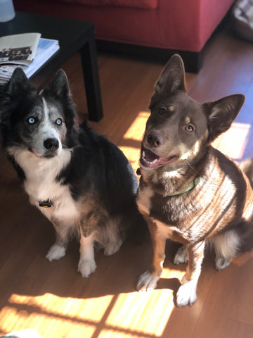 Kona and Shea rescue dogs and Casual Furiday testers