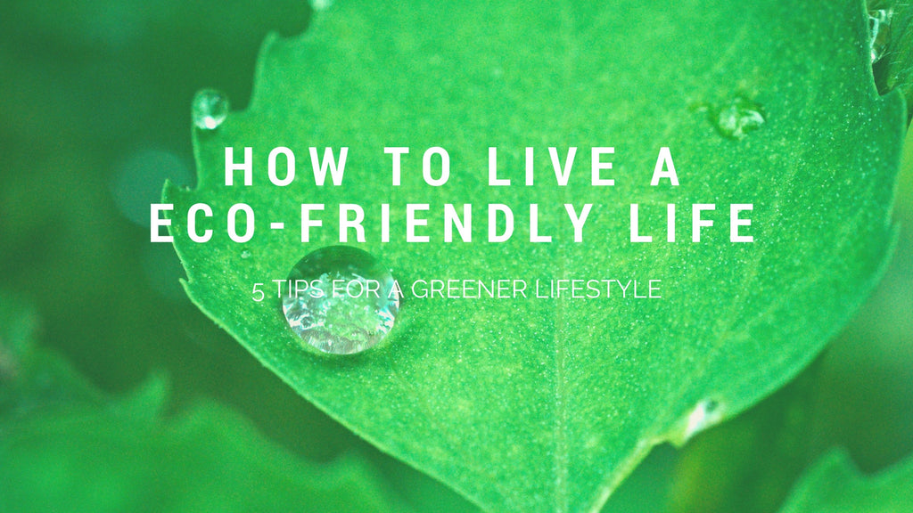 5 Tips for Living a More Eco-Friendly Lifestyle