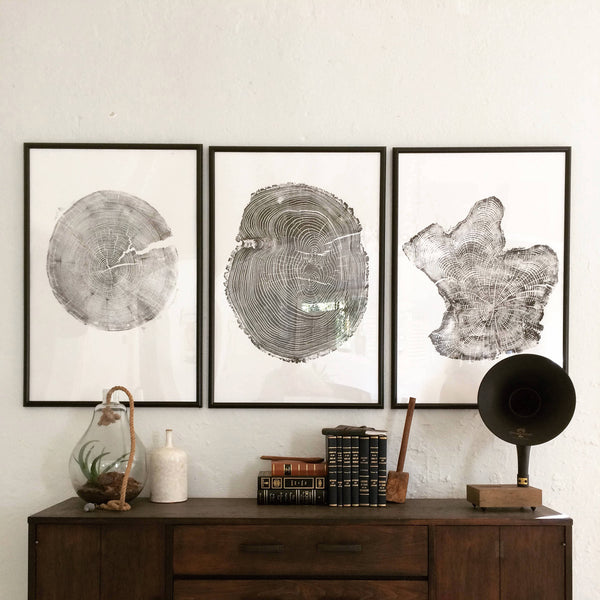 Set of 3 Large Tree Ring Prints