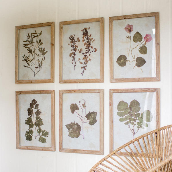 Set of Six Leaf Prints Under Glass