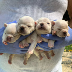 Aikido x Bailey Pups - SOLD!!!