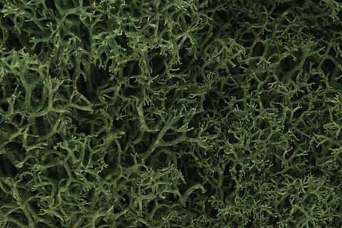 Woodlands Scenic LICHEN - Medium Green