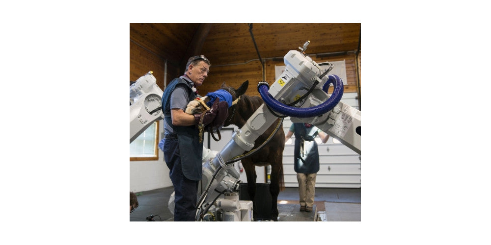 Revolutionary Robotics for Horses