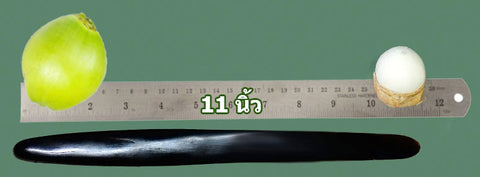 Buffalo Horn Knife 11 Inch - Cooking Thai Food