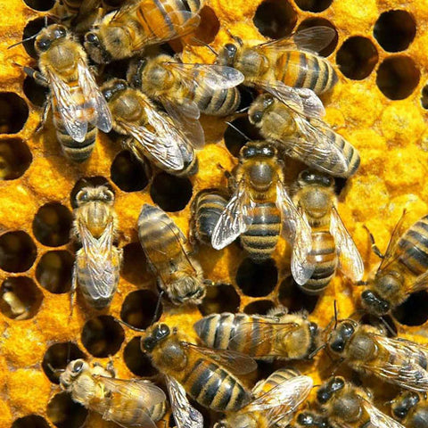 bees uk curtain makers