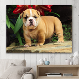 Dog Bulldog
