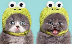 Two cats wearing frog hats