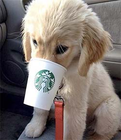 A puppy with his nose in a coffee cup