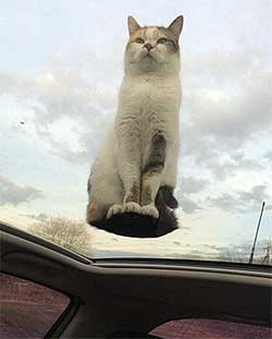 View of a cat sitting on a sun roof from inside the car