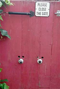 Dogs peeking through doggy peep holes in a gate.