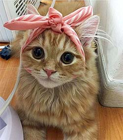 kitty with bow on head