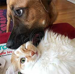 A dog chewing on a cat's face lovingly
