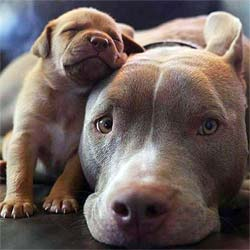 Tiny puppy and its mama