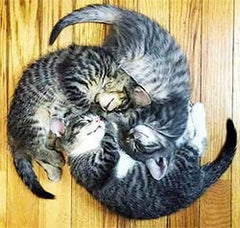 3 cats making a spiral
