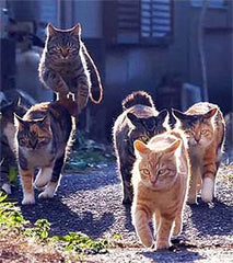 5 cats on a mission