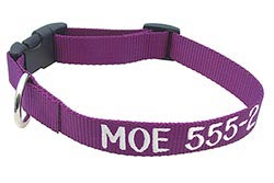Purple adjustable collar embroidered with a name and phone number