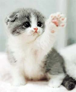kitten waving