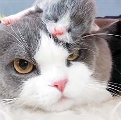 cat with newborn kitten sleeping on her head