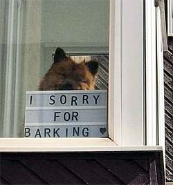 dog with I'm Sorry For Barking sign