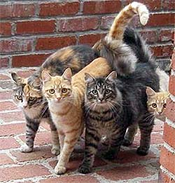 4 cats coming around the corner together
