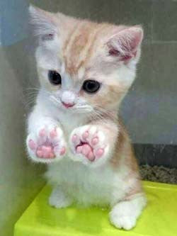 A kitten with its paws on the glass