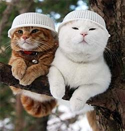 cats in a tree with bowls on their heads?