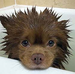 dog with spiky wet hair