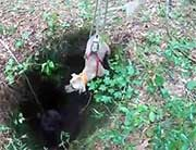 Dog being hoisted out of a hole