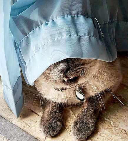 cat hiding behind a curtain