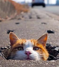 cat peeking it's head out of a hole in the blacktop