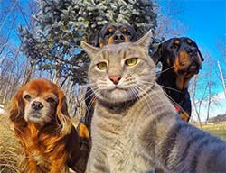 a cat taking a selfie of he and his dog friends