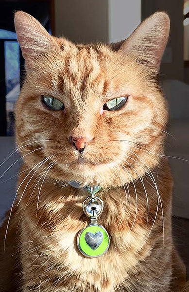 Orange kitty wearing LuckyPet lime green tag
