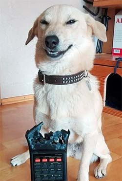 Dog proud of his work chewing up the remote