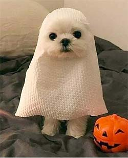 Dog in a papertowel ghost costume