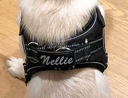 Personalized Harnesses
