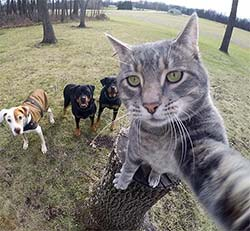 cat taking selfie of her and dog pals