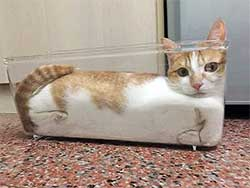 cat in a clear plastic container