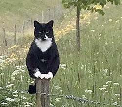 A cat perched atop a fence post