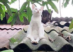 A white cat sitting like a human