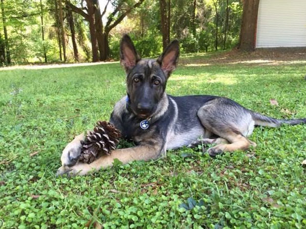 Dax and his pine cone